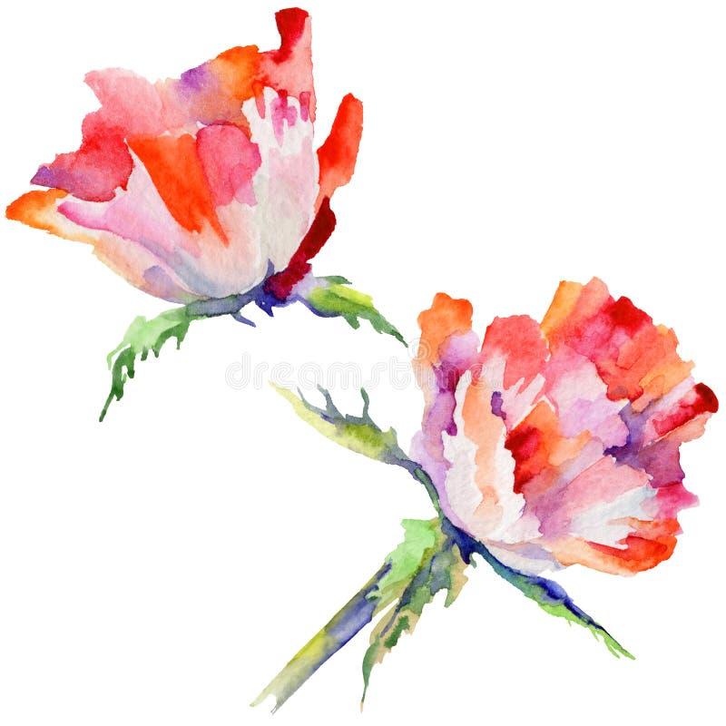 Download Flor De La Amapola Del Wildflower En Un Estilo De La Acuarela Aislada Stock de ilustración - Ilustración de primer, trazado: 100526933
