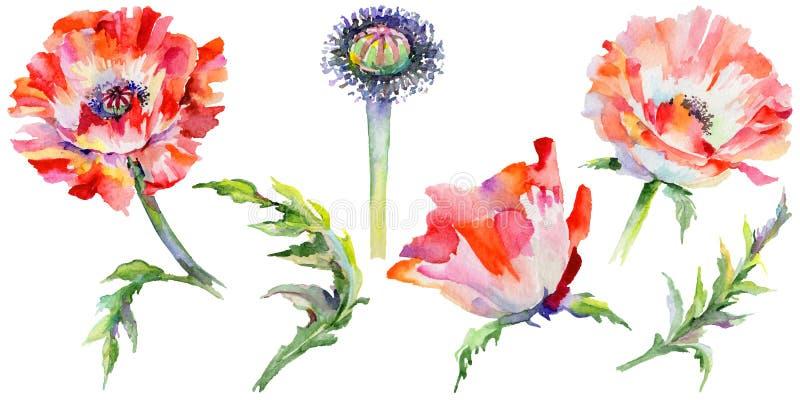 Download Flor De La Amapola Del Wildflower En Un Estilo De La Acuarela Aislada Stock de ilustración - Ilustración de flor, licencia: 100526937