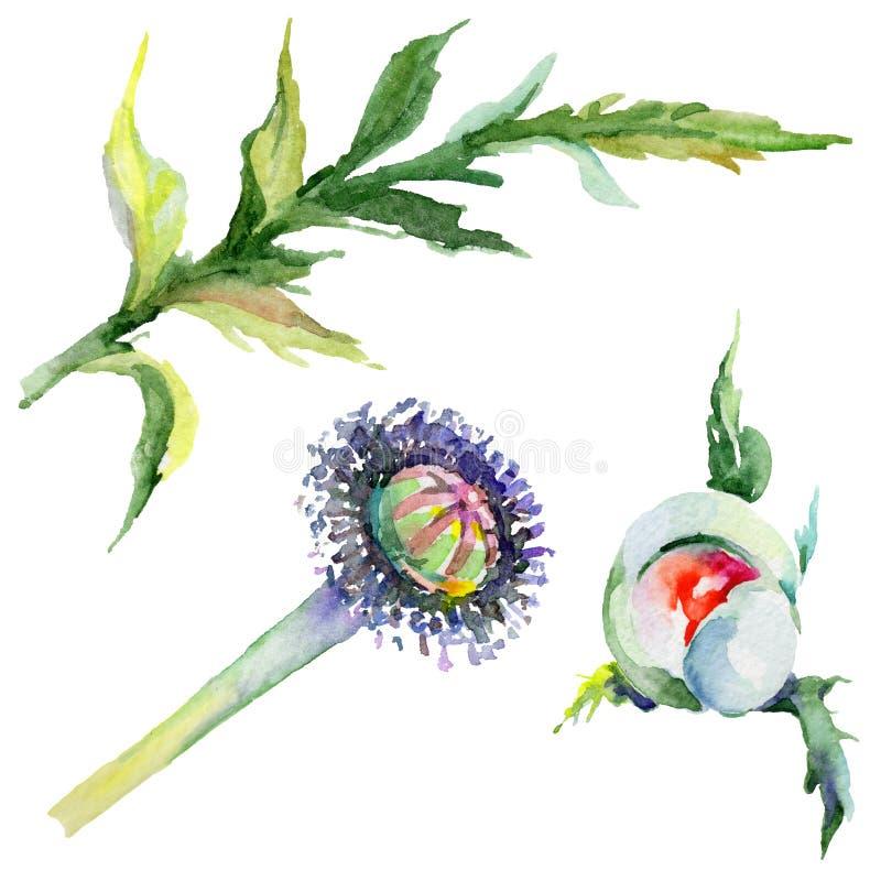 Download Flor De La Amapola Del Wildflower En Un Estilo De La Acuarela Aislada Stock de ilustración - Ilustración de mano, decoración: 100527050