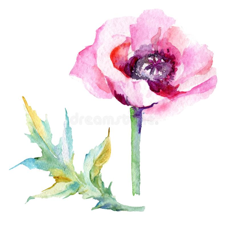 Download Flor De La Amapola Del Wildflower En Un Estilo De La Acuarela Aislada Stock de ilustración - Ilustración de colección, hoja: 100527106