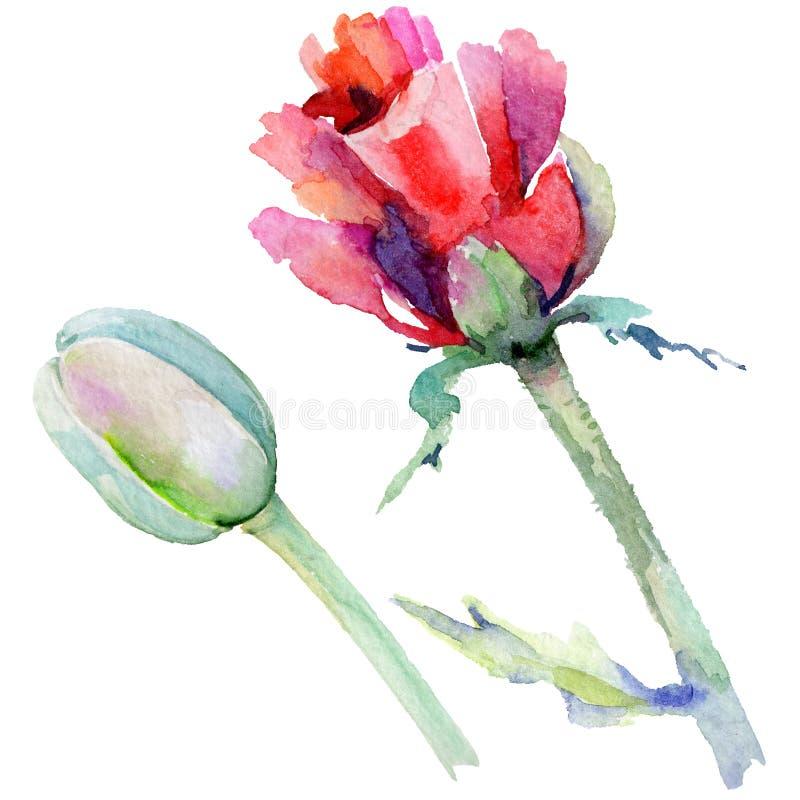 Download Flor De La Amapola Del Wildflower En Un Estilo De La Acuarela Aislada Stock de ilustración - Ilustración de colección, trazado: 100527226