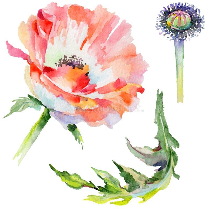 Download Flor De La Amapola Del Wildflower En Un Estilo De La Acuarela Aislada Stock de ilustración - Ilustración de arte, verde: 100527239