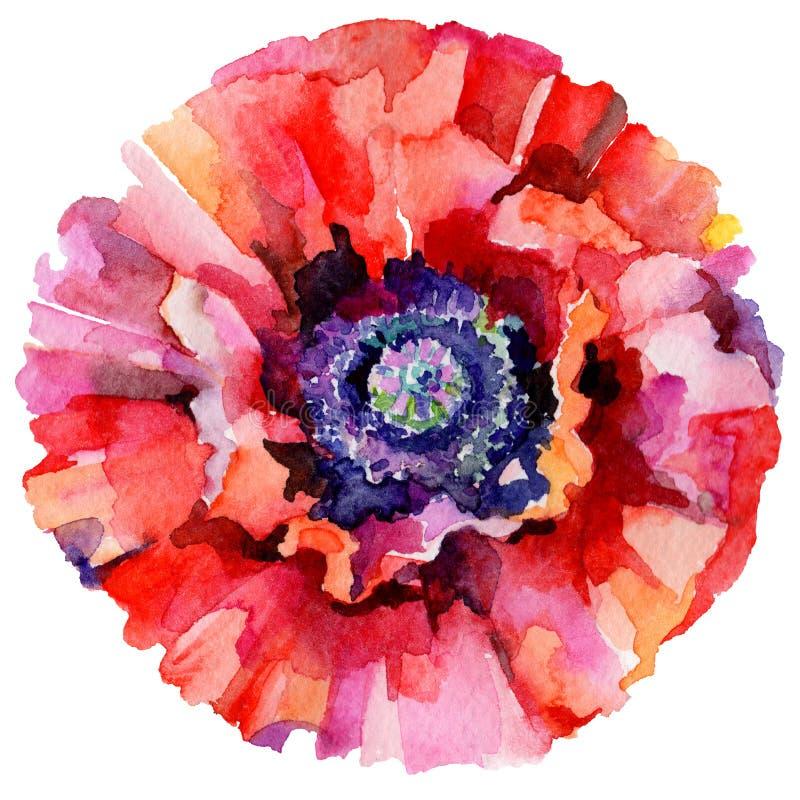 Download Flor De La Amapola Del Wildflower En Un Estilo De La Acuarela Aislada Stock de ilustración - Ilustración de ilustración, colección: 100527269