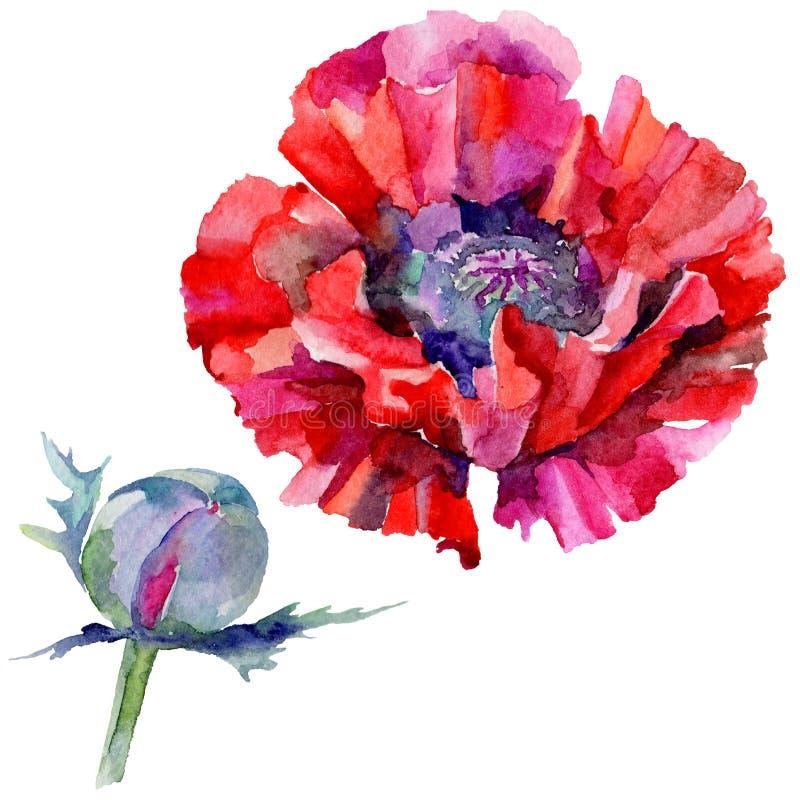 Download Flor De La Amapola Del Wildflower En Un Estilo De La Acuarela Aislada Stock de ilustración - Ilustración de licencia, flora: 100527283