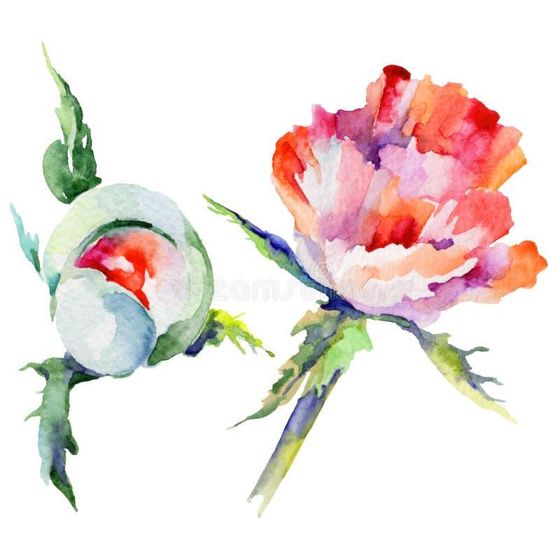 Download Flor De La Amapola Del Wildflower En Un Estilo De La Acuarela Aislada Stock de ilustración - Ilustración de decoración, fondo: 100527307
