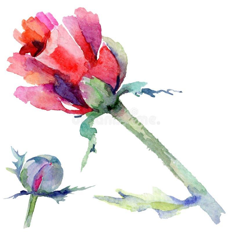 Download Flor De La Amapola Del Wildflower En Un Estilo De La Acuarela Aislada Stock de ilustración - Ilustración de primer, ornamento: 100527313