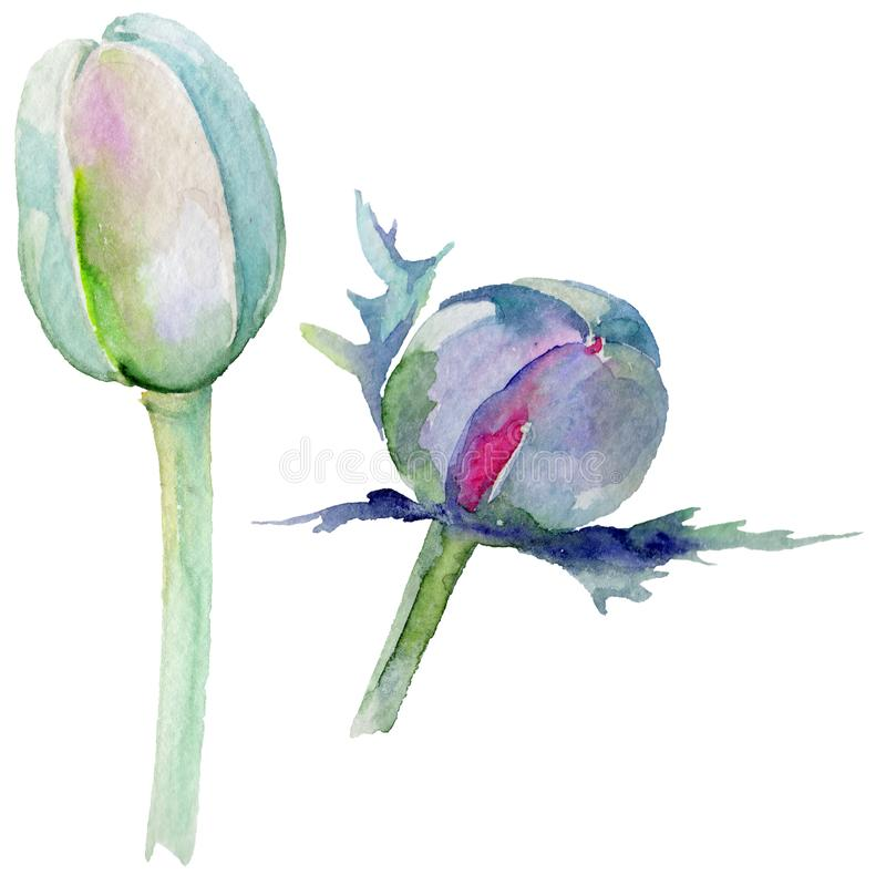 Download Flor De La Amapola Del Wildflower En Un Estilo De La Acuarela Aislada Stock de ilustración - Ilustración de decoración, jardín: 100527350