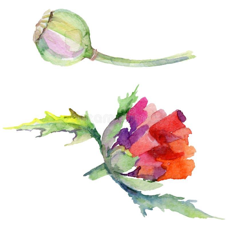 Download Flor De La Amapola Del Wildflower En Un Estilo De La Acuarela Aislada Stock de ilustración - Ilustración de verde, travieso: 100527378