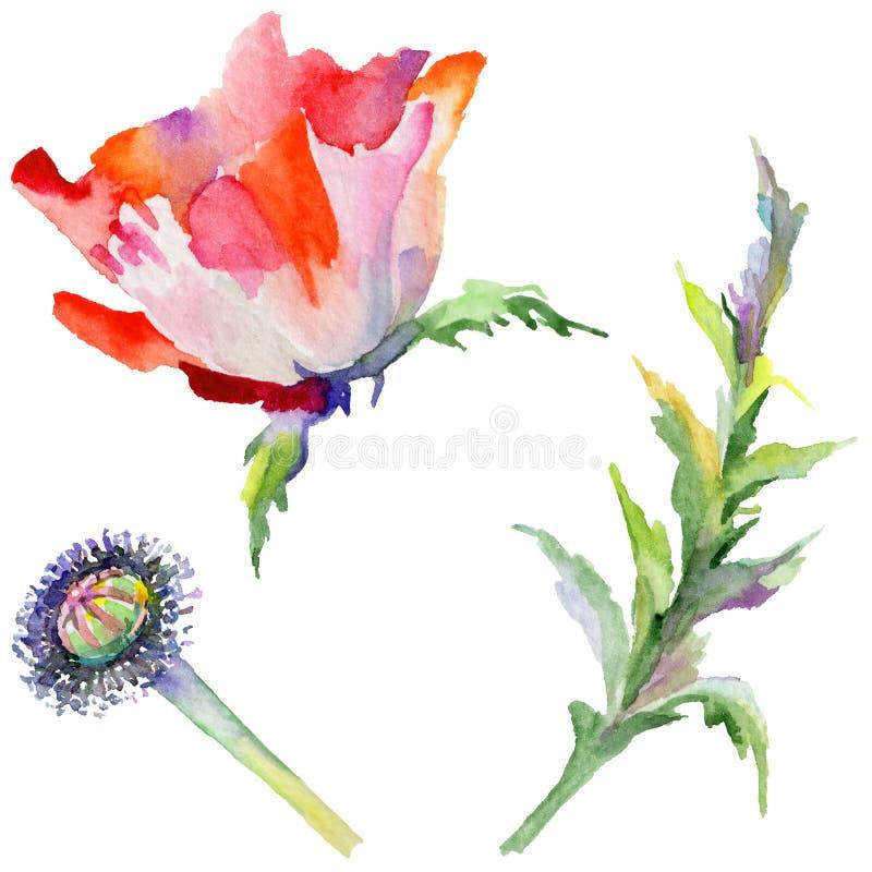 Download Flor De La Amapola Del Wildflower En Un Estilo De La Acuarela Aislada Stock de ilustración - Ilustración de aguafuerte, colección: 100527383