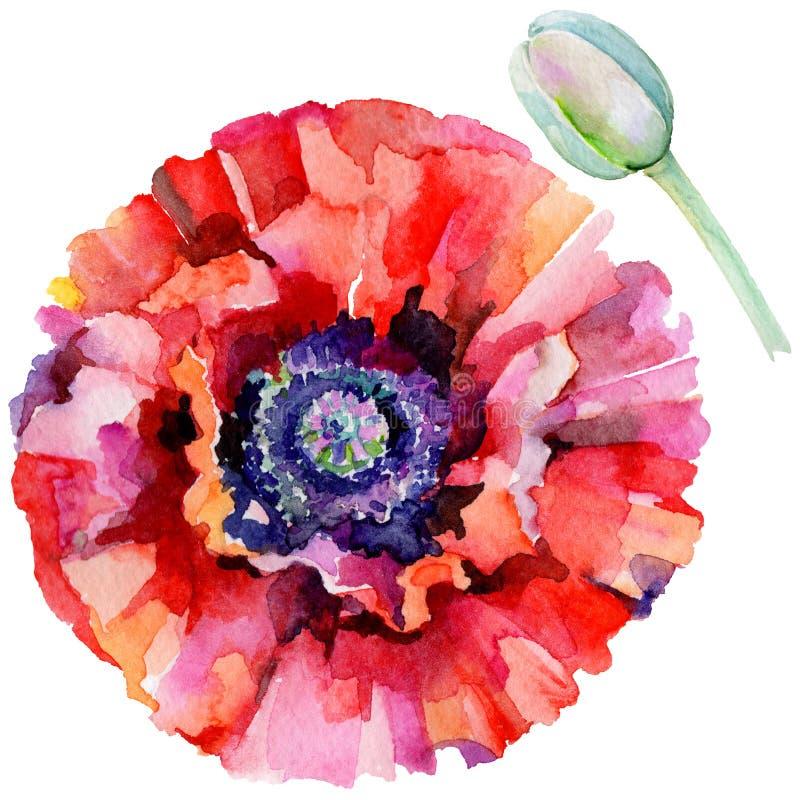 Download Flor De La Amapola Del Wildflower En Un Estilo De La Acuarela Aislada Stock de ilustración - Ilustración de tinta, gráfico: 100527401