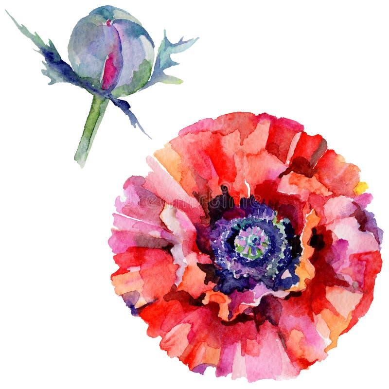 Download Flor De La Amapola Del Wildflower En Un Estilo De La Acuarela Aislada Stock de ilustración - Ilustración de aislado, hoja: 100527444