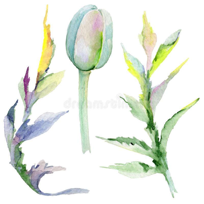 Download Flor De La Amapola Del Wildflower En Un Estilo De La Acuarela Aislada Stock de ilustración - Ilustración de hoja, pétalo: 100527448