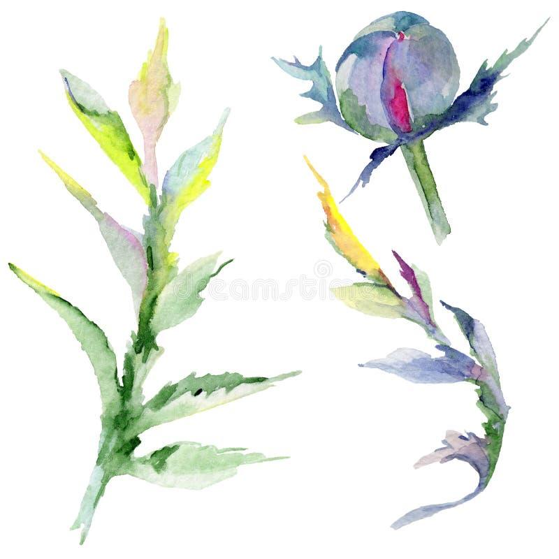 Download Flor De La Amapola Del Wildflower En Un Estilo De La Acuarela Aislada Stock de ilustración - Ilustración de opio, floral: 100527542