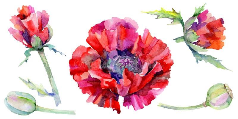 Download Flor De La Amapola Del Wildflower En Un Estilo De La Acuarela Aislada Stock de ilustración - Ilustración de licencia, trazado: 100527648