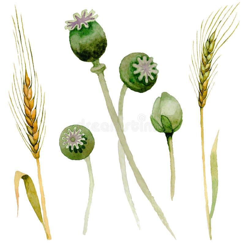 Flor de la amapola del Wildflower en un estilo de la acuarela aislada stock de ilustración