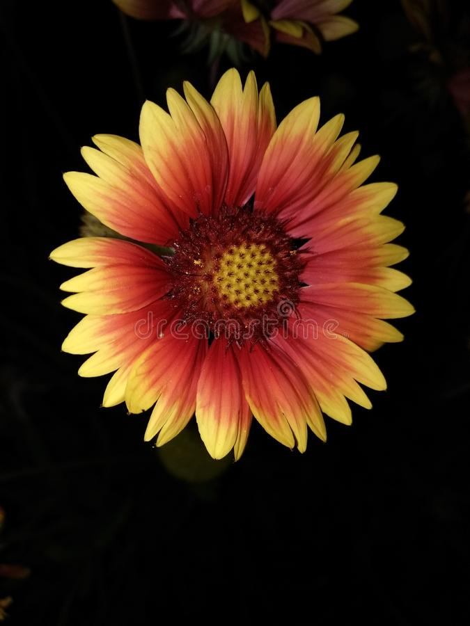 Flor de la belleza extraordinaria imagenes de archivo