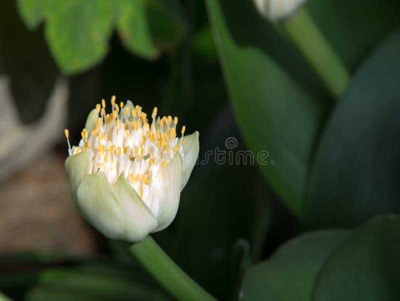 Flor de la brocha foto de archivo libre de regalías