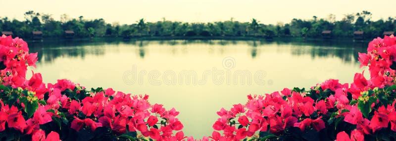 Flor de la buganvilla al lado del lago y de la sol imagen de archivo