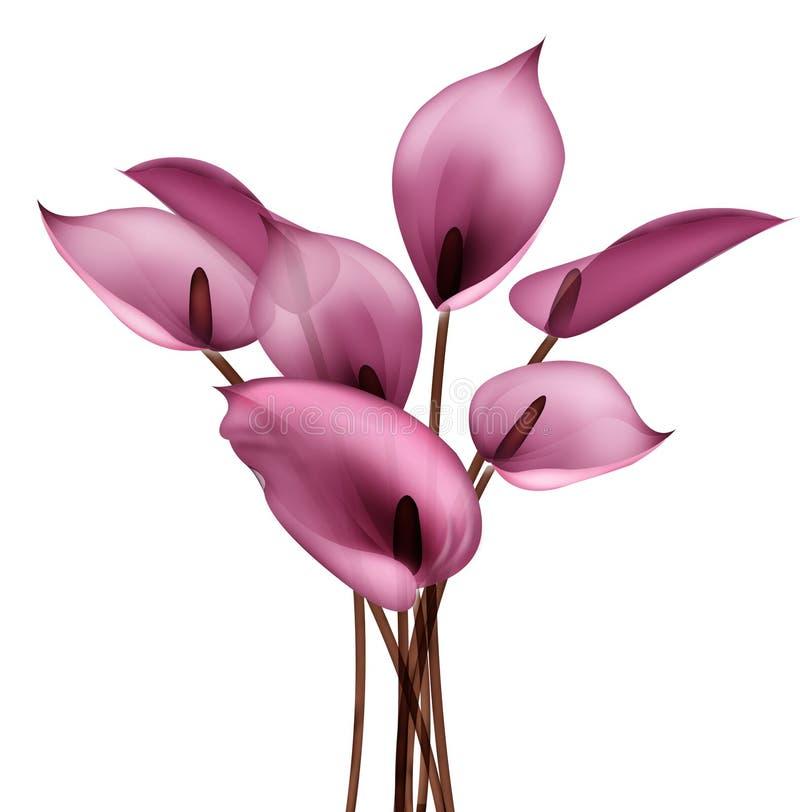 Flor de la cala libre illustration