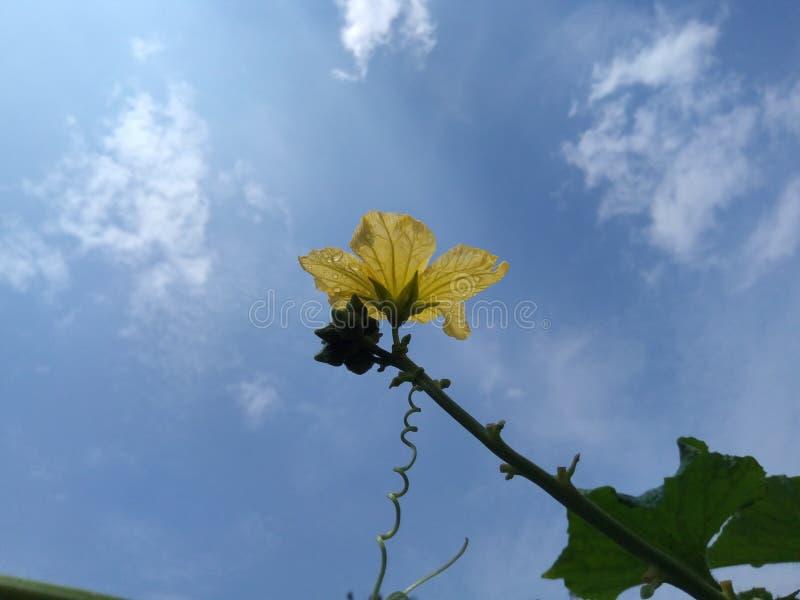Flor de la calabaza de la serpiente fotografía de archivo libre de regalías