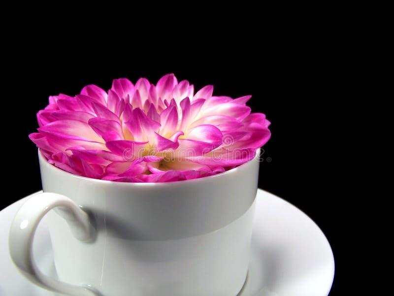Flor de la dalia en una taza fotos de archivo