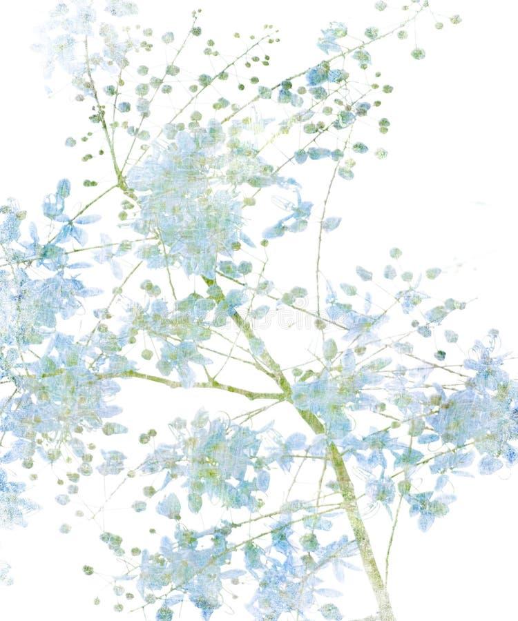 Flor de la flor en blanco libre illustration