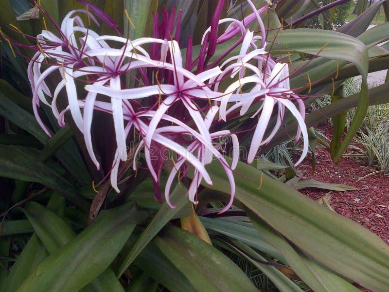 Flor de la Florida imagen de archivo libre de regalías