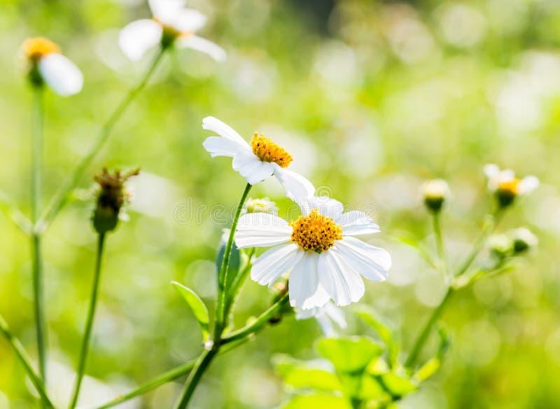 Flor de la hierba del primer imagenes de archivo