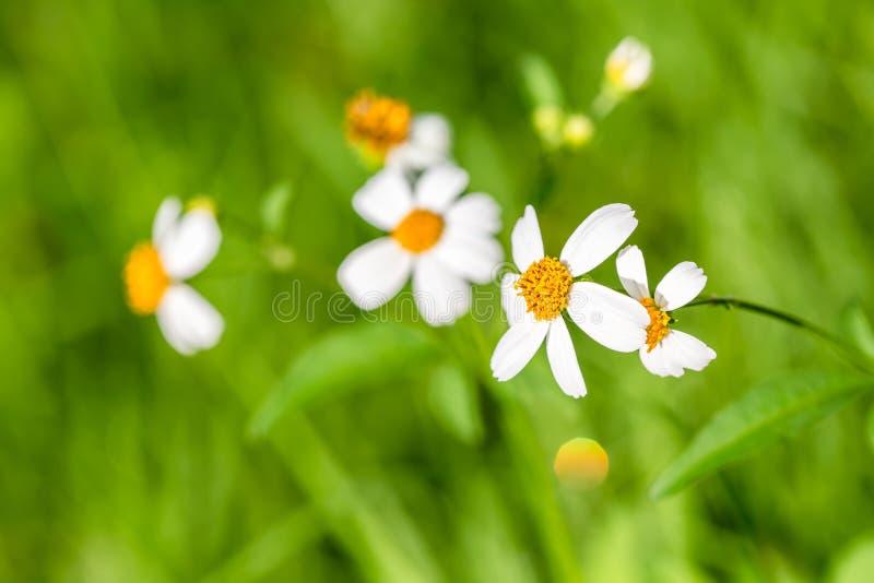 Flor de la hierba del primer foto de archivo libre de regalías