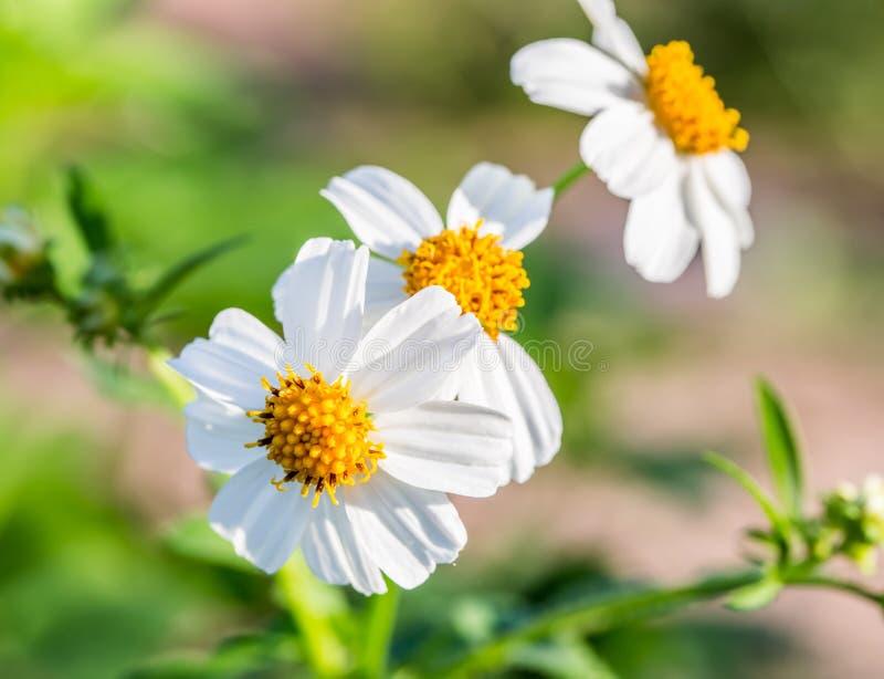 Flor de la hierba del primer fotografía de archivo libre de regalías