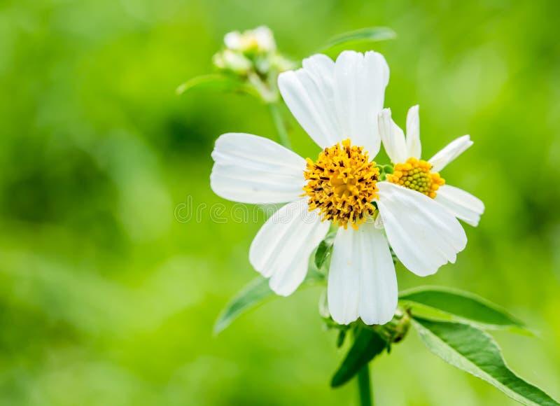 Flor de la hierba del primer foto de archivo