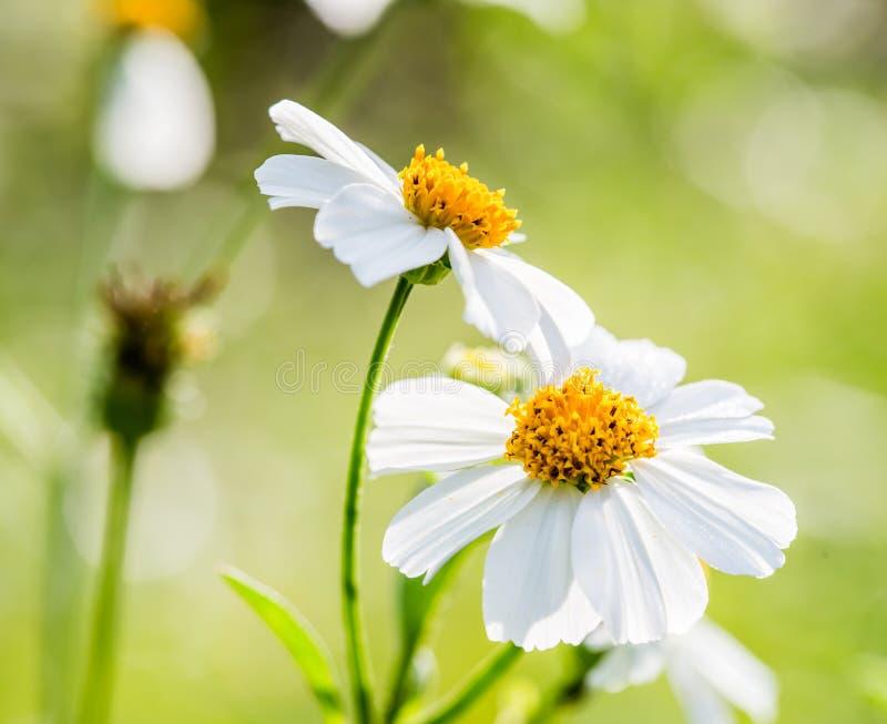 Flor de la hierba del primer fotos de archivo