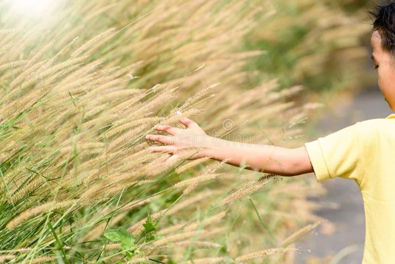 Flor de la hierba del tacto de la mano al lado del camino imágenes de archivo libres de regalías