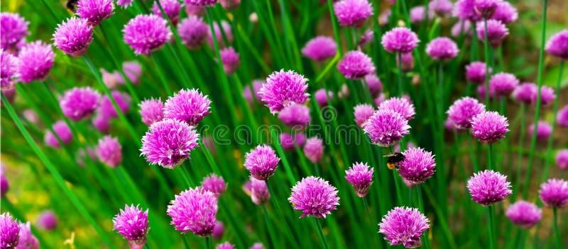 Flor de la hierba - panorma imagenes de archivo