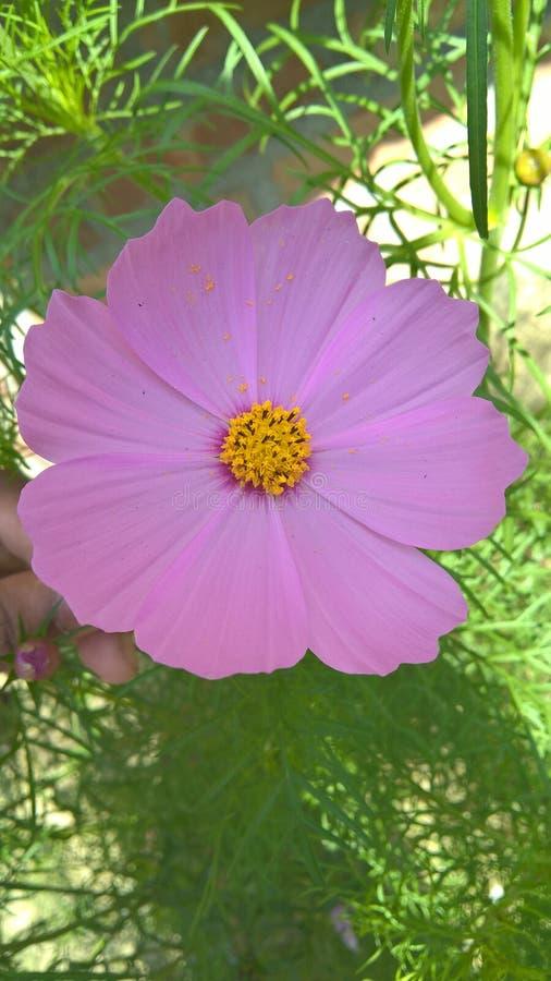 Flor de la hierba de una hierba fotos de archivo