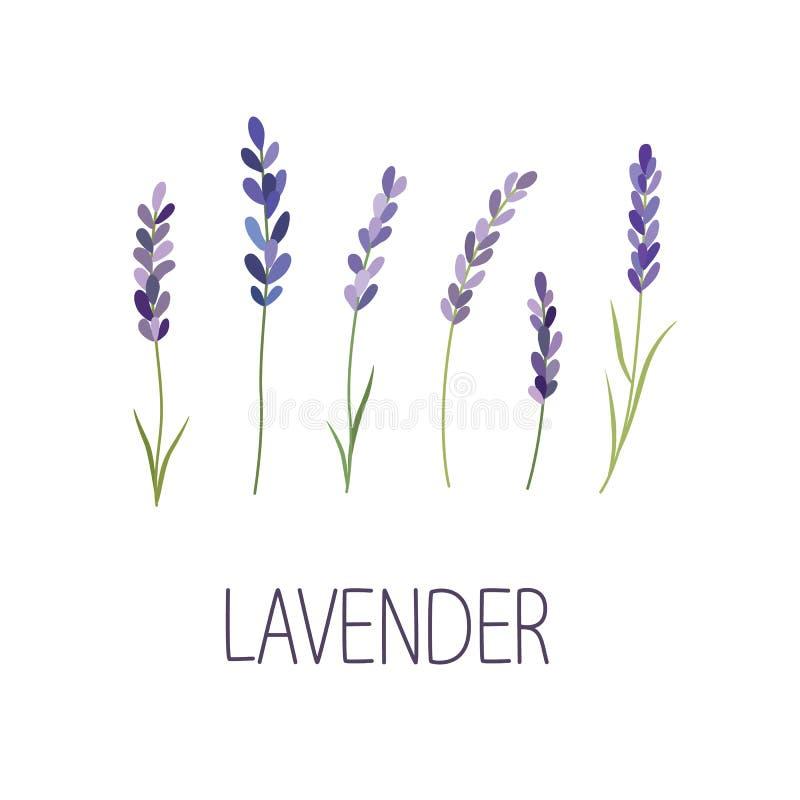 Flor de la lavanda Diseñador para el diseño, logotipo, poniendo letras libre illustration