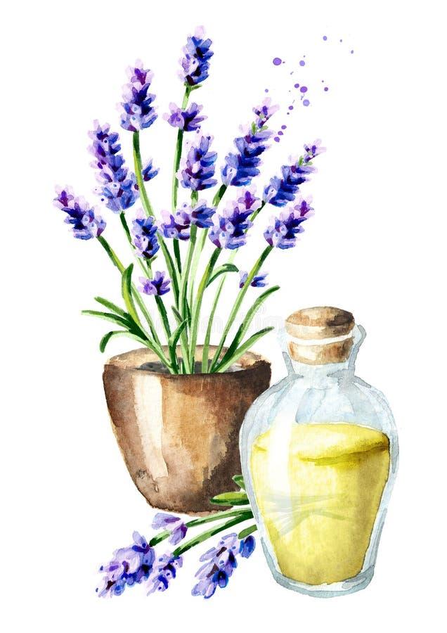 Flor de la lavanda en el pote y el aceite esencial Ejemplo dibujado mano de la acuarela, aislado en el fondo blanco ilustración del vector