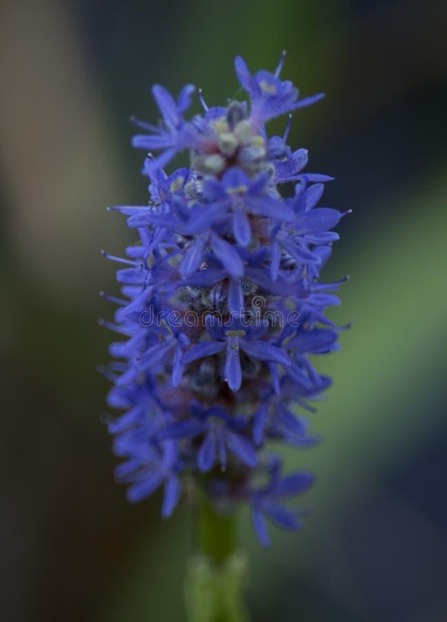 Flor de la mañana en primavera fotos de archivo libres de regalías