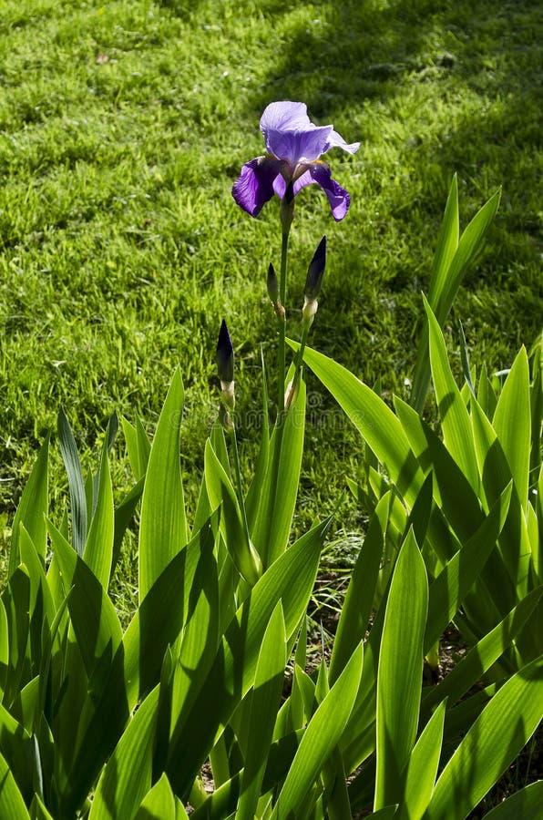 Flor de la macro de la primavera fotos de archivo libres de regalías