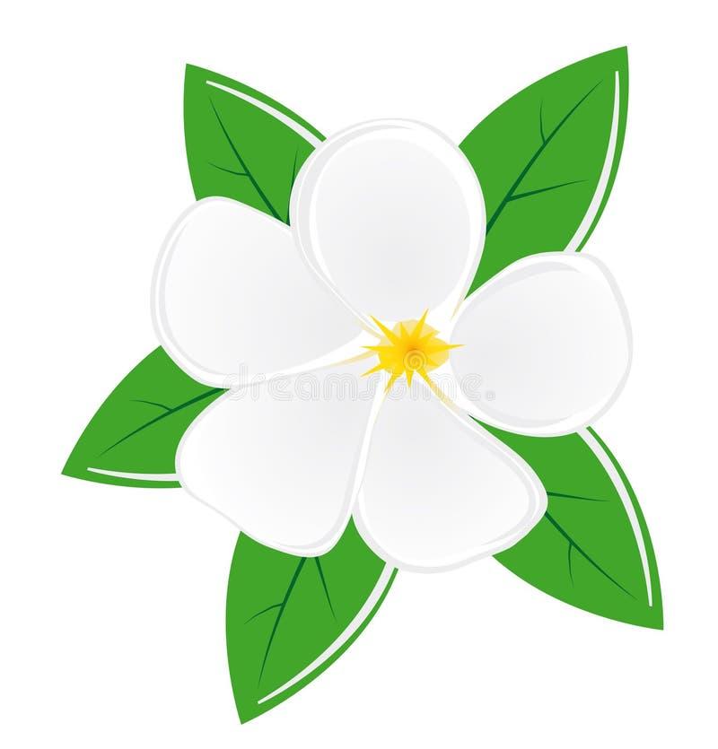 Flor de la magnolia ilustración del vector