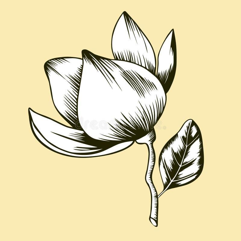 Flor de la magnolia en fondo beige stock de ilustración