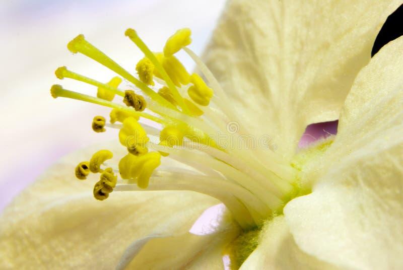 Flor de la manzana fotografía de archivo libre de regalías