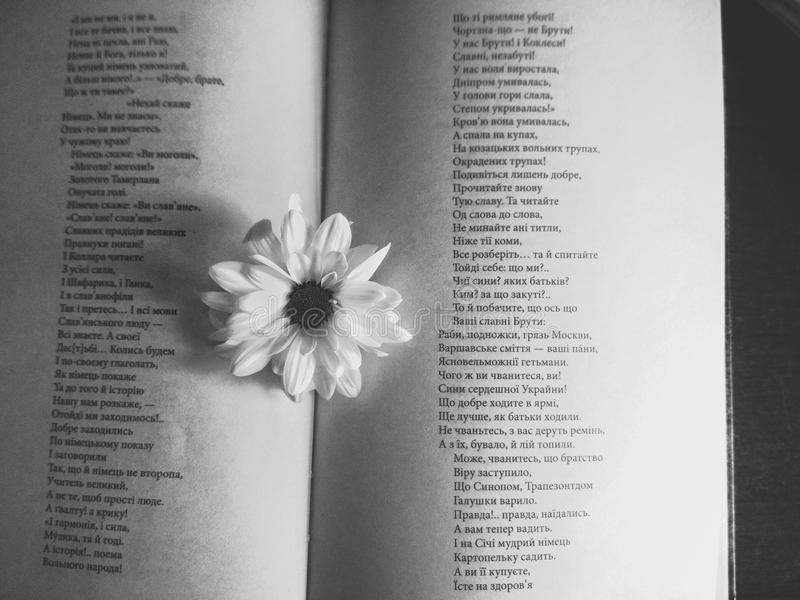 Flor de la manzanilla en las páginas del libro foto de archivo libre de regalías