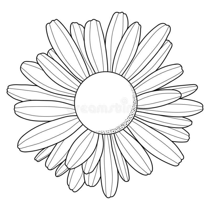 Flor de la manzanilla Silueta del negro del esquema Aislado en el fondo blanco Ilustraci?n del vector stock de ilustración