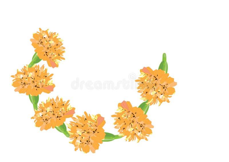 Flor de la maravilla con licencia en el fondo blanco para libre illustration