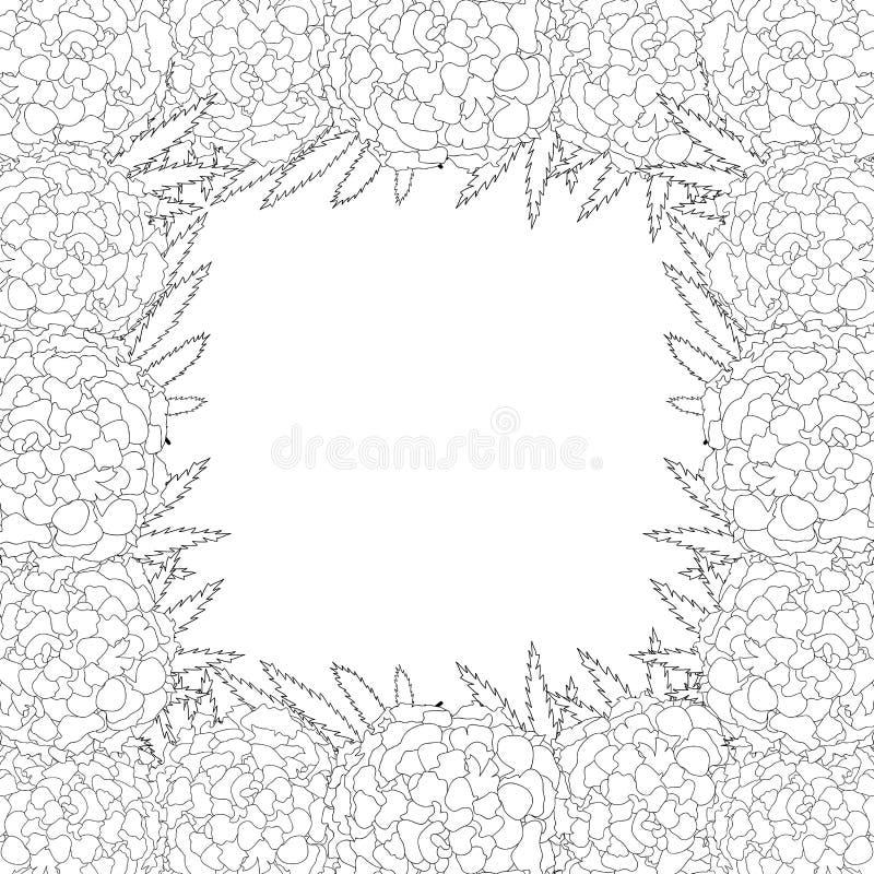 Flor de la maravilla - frontera del esquema de Tagetes aislada en el fondo blanco Ilustración del vector libre illustration