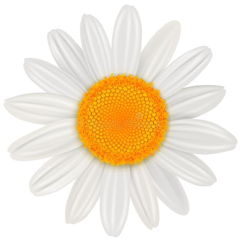 Flor de la margarita aislada stock de ilustración