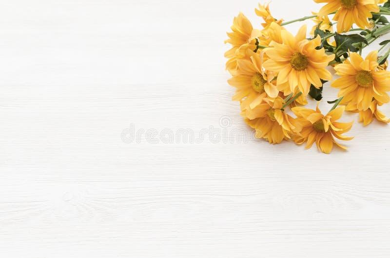 Flor de la margarita del crisantemo en el fondo blanco con el espacio de la copia fotos de archivo