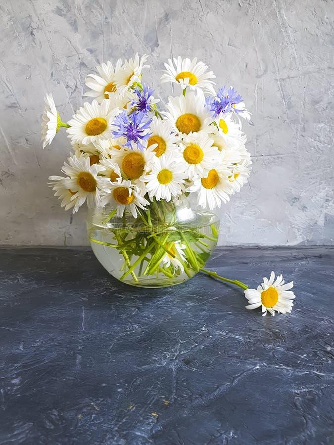 Flor de la margarita del florero, aciano en fondo concreto imagen de archivo libre de regalías