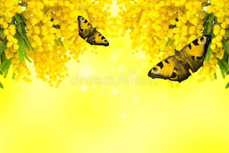 Flor de la mimosa con la mariposa en fondo amarillo fotos de archivo libres de regalías
